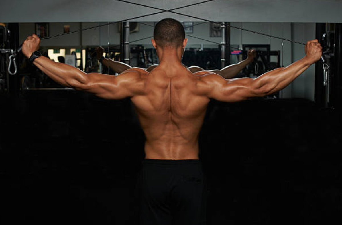 Middle Back Muscles